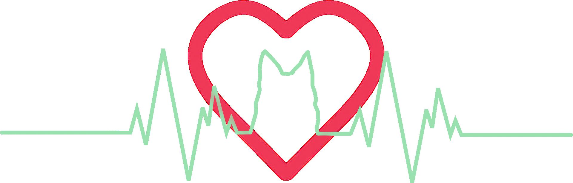 Herzensbotschaft -Tierkommunikation
