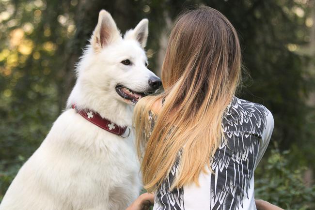 Tierkommunikation Herzensbotschaft